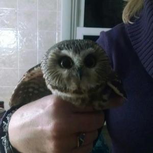 OWL_11.22.14