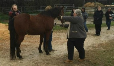Diana horse day